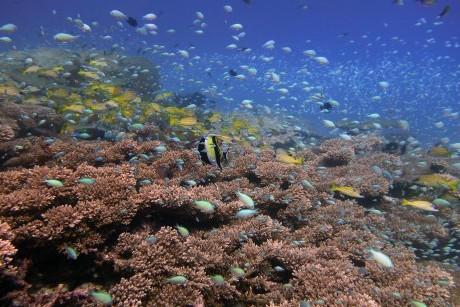 Diverse fish life