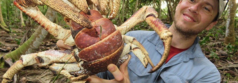 Coconut crabs of the Chagos Archipelago