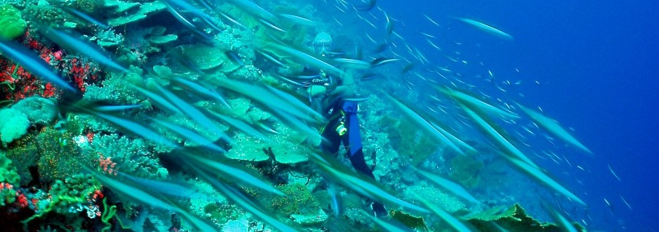 Event: The Chagos Marine Reserve - Building on Success