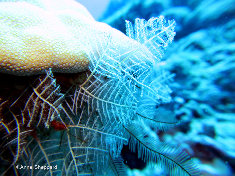 Stinging hydroids, Middle Island