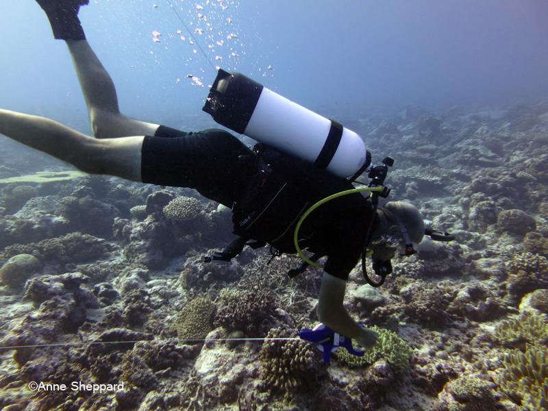 Eagle Island lagoon, diver working underwater