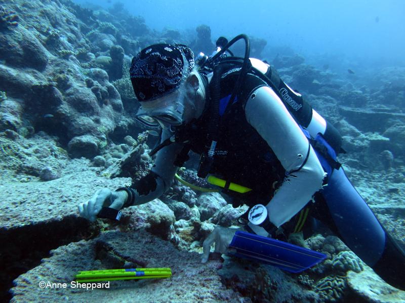 Prof Charles Sheppard counting juvenile coral recruits, Peros Banhos Atoll