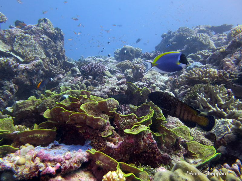 Reef in the Peros Banhos Atoll