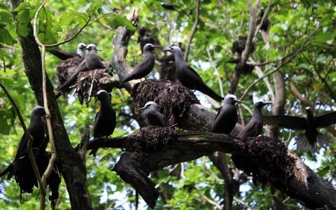 Ile Vache Marine Bird Habitat Restoration Project Reconnaissance
