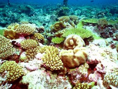 February 2012 Expedition - Day 6 - The most perfect corals I've ever seen