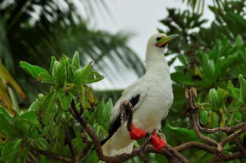 CCT receives Darwin Initiative grant to increase natural biodiversity of Chagos Archipelago