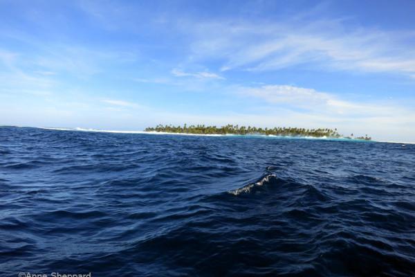 Healthy Islands, Healthy Reefs: Awarded Darwin Plus grant