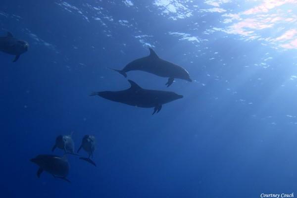 2015 Darwin Science Expedition - Day 13 - Ile Takamaka & Sam's Knoll