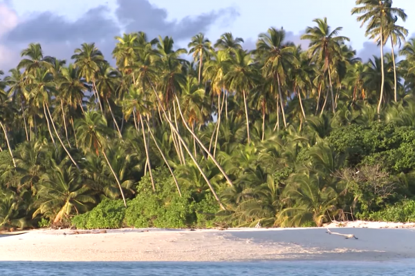 Could the removal of coconut plantations help seabird numbers increase?