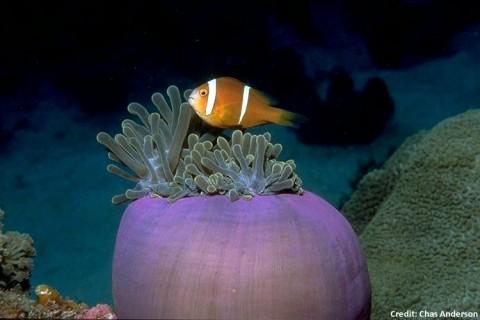 UK Designates World's Largest Marine Reserve