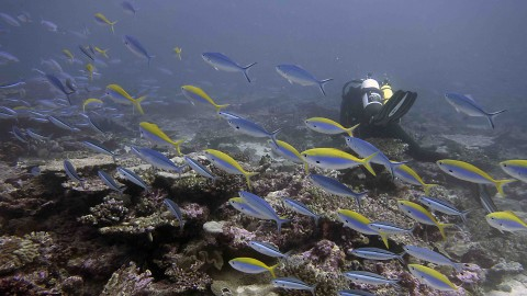 BIOT MPA Survey Expedition 2015 - Day 11 - East Great Chagos Bank 2 miles east of Nelson Island