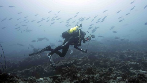 BIOT MPA Survey Expedition 2015 - Day 13 - Egmont Atoll