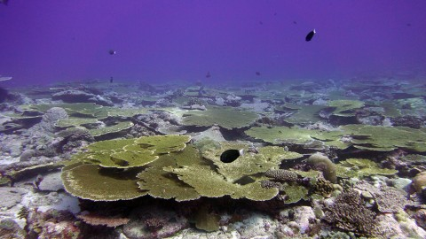 Climate change threatens the survival of coral reefs