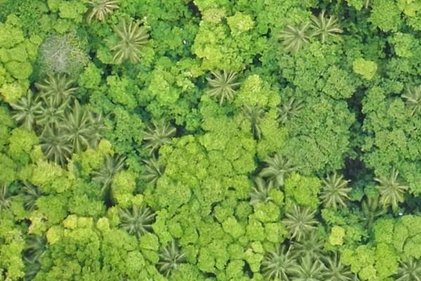 Surveying the vegetation of Diego Garcia