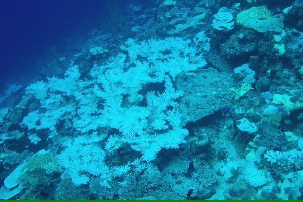 Recent coral bleaching in the Chagos Archipelago