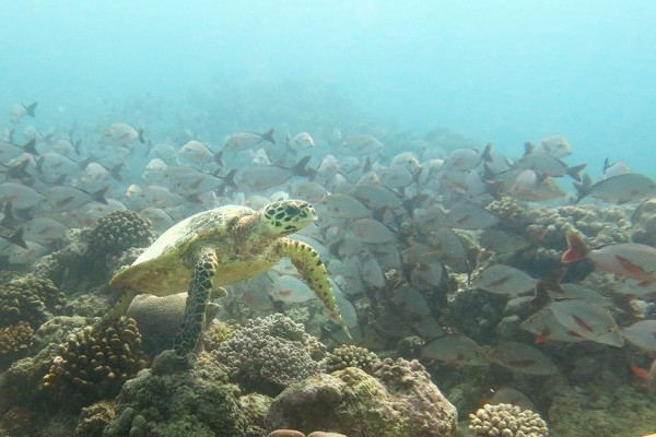 2015 Darwin Science Expedition - Day 8 A day off from diving… islands awaits!