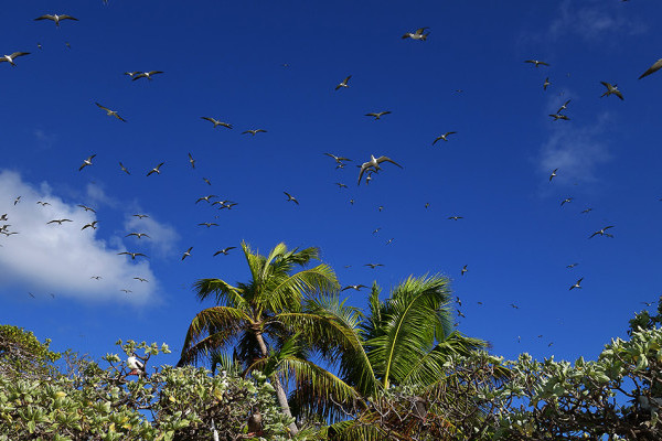 NEWS: First successful invasive rat eradication in the Chagos Archipelago
