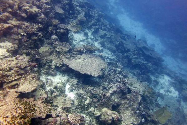Coral Condition and Ocean Temperatures