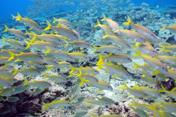 Chagos Community Environment Project: Chagos Fun Day