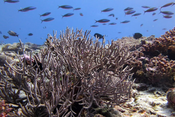 Chagos Coral Reefs are praised