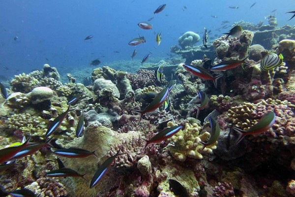 Good news for reefs - a big new MPA on the way
